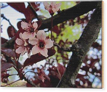 Cherry Blosoms Wood Print by Danielle  Parent