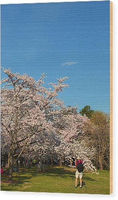 Cherry Blossoms 2013 - 029 Wood Print by Metro DC Photography