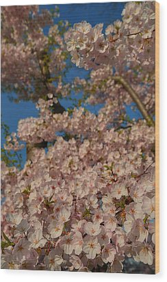 Cherry Blossoms 2013 - 034 Wood Print by Metro DC Photography