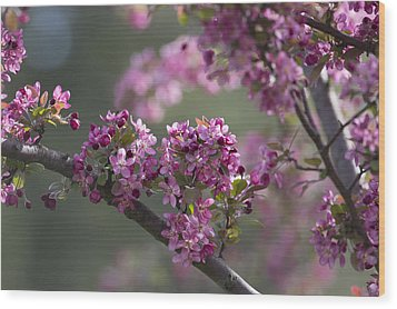 Cherry Blossoms Wood Print by Dale Kincaid