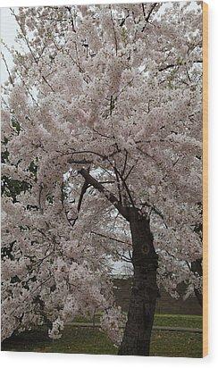 Cherry Blossoms - Washington Dc - 0113118 Wood Print by DC Photographer
