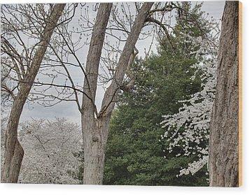 Cherry Blossoms - Washington Dc - 011353 Wood Print by DC Photographer