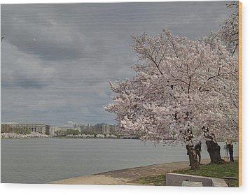 Cherry Blossoms - Washington Dc - 011362 Wood Print by DC Photographer