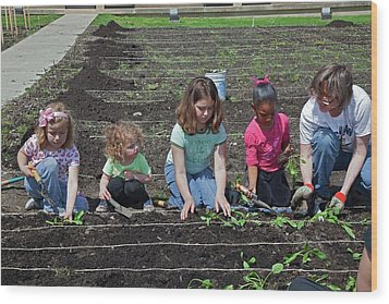 Children At Work In A Community Garden Wood Print by Jim West
