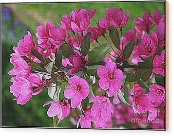 Chinese Apple Blossoms Wood Print by Dora Sofia Caputo Photographic Art and Design