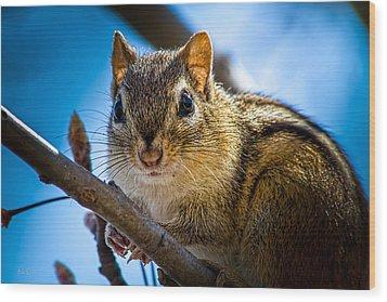 Chipmunk On A Branch Wood Print by Bob Orsillo
