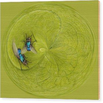 Circle Of Flies Wood Print by Jean Noren