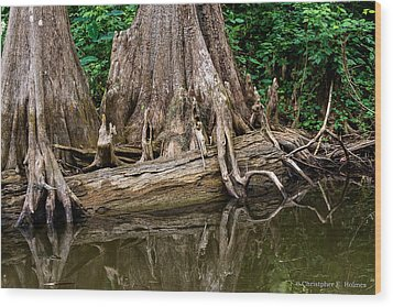 Clinging Cypress Wood Print by Christopher Holmes