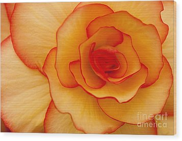 Close To Saturn Wood Print by Anne Gilbert