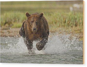 Coastal Grizzly Boar Fishing Wood Print by Kent Fredriksson