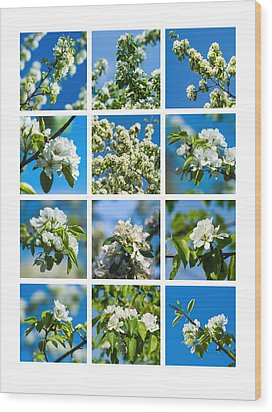 Collage Spring Blossoms 1 Wood Print by Alexander Senin