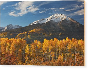 Colorado Gold Wood Print by Darren  White