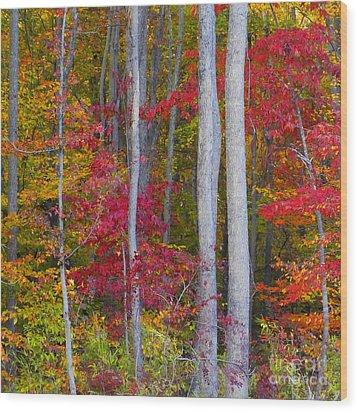 Colorful Fall Forest Wood Print by Scott Cameron