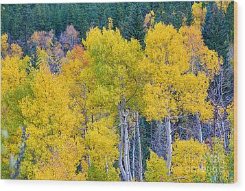 Colorful Forest Wood Print by James BO  Insogna