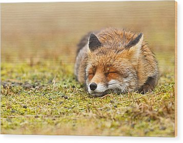 Comfortably Fox Wood Print by Roeselien Raimond