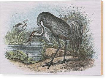 Common Crane Wood Print by English School