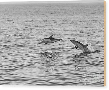Common Dolphins Leaping. Wood Print by Jamie Pham