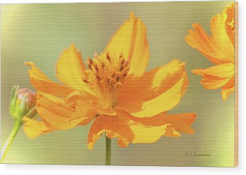 Wood Print featuring the photograph Cosmos Flowers by A Gurmankin