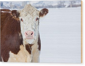 Cow - Fine Art Photography Print Wood Print by James BO  Insogna