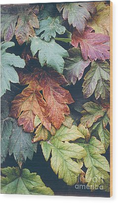 Cow Parsnip Leaves In The Fall Wood Print by Bruce M Herman