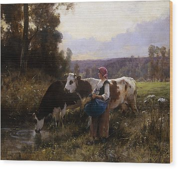 Cows At The Watering Hole Wood Print by Julien Dupre