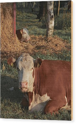 Cows At Work 2 Wood Print by Odd Jeppesen