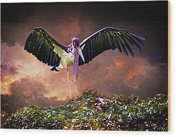 Crane The Lawyer Wood Print by Chris Lord