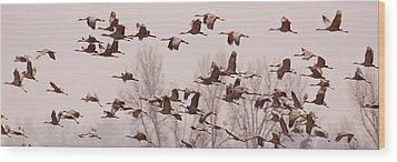 Cranes Across The Sky Wood Print by Don Schwartz