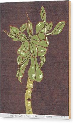 Crassula Portulacea Quata Wood Print by N Gedze