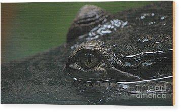 Croc's Eye-1 Wood Print by Gary Gingrich Galleries
