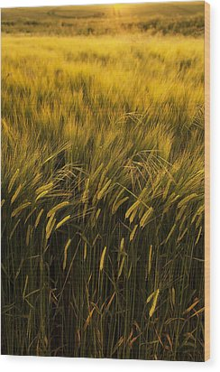 Crops Wood Print by Svetlana Sewell