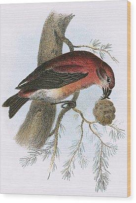 Crossbill Wood Print by English School