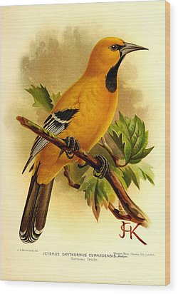 Curacao Oriole Wood Print by J G Keulemans