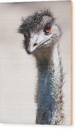 Curious Emu Wood Print by Carol Groenen