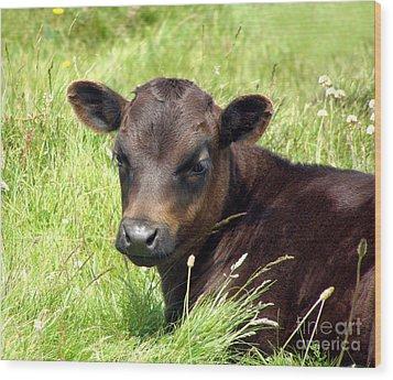 Cute Cow Wood Print by Terri Waters
