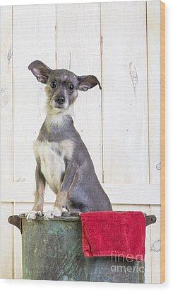 Cute Dog Washtub Wood Print by Edward Fielding