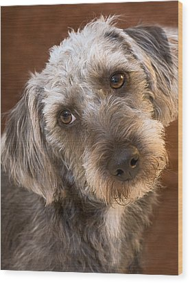 Cute Pup Wood Print by Natalie Kinnear