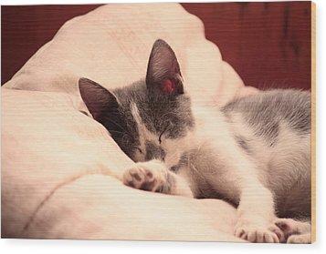 Cute Sleeping Kitten Wood Print by Tilen Hrovatic