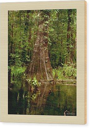 Cypress Roots Ichetucknee Wood Print by Linda Olsen