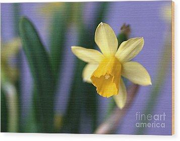 Daffodil Wood Print by AmaS Art