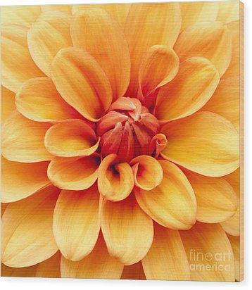 Dahlia Squared Wood Print by Anne Gilbert