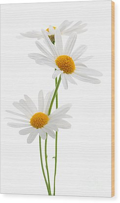 Daisies On White Background Wood Print by Elena Elisseeva