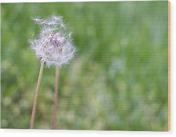 Dandelion Seed Ball Wood Print by James Drake