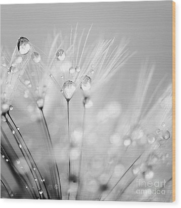 Dandelion Seed With Water Droplets In Black And White Wood Print by Natalie Kinnear