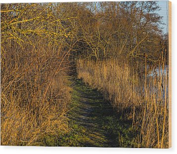 december light - Leif Sohlman Wood Print by Leif Sohlman