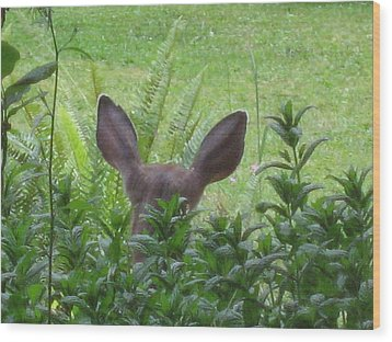 Deer Ear In A Mint Patch Wood Print by Kym Backland