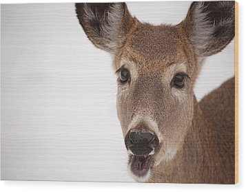 Deer Talk Wood Print by Karol Livote