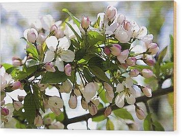 Defining Spring 3 Wood Print by Joanna Madloch