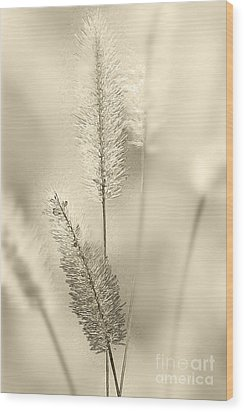 Delicate Sweetgrass Wood Print by Heiko Koehrer-Wagner