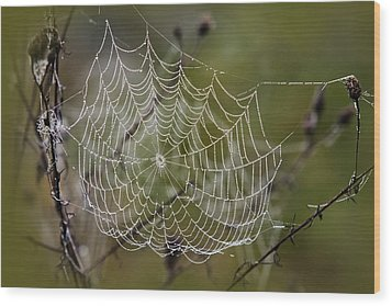 Dew Drops Spider Web Wood Print by Christina Rollo